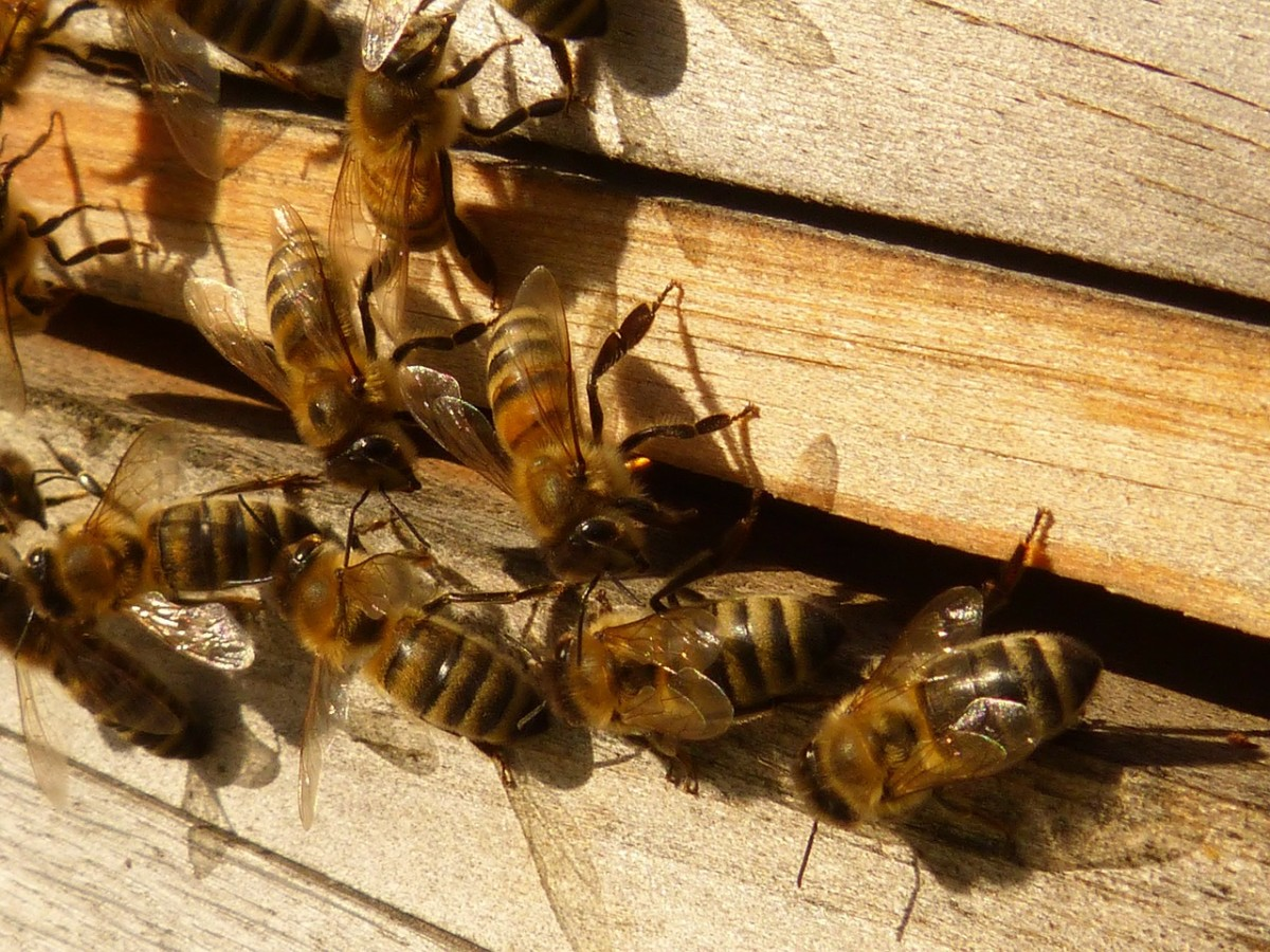 Bee Hives for Pollination