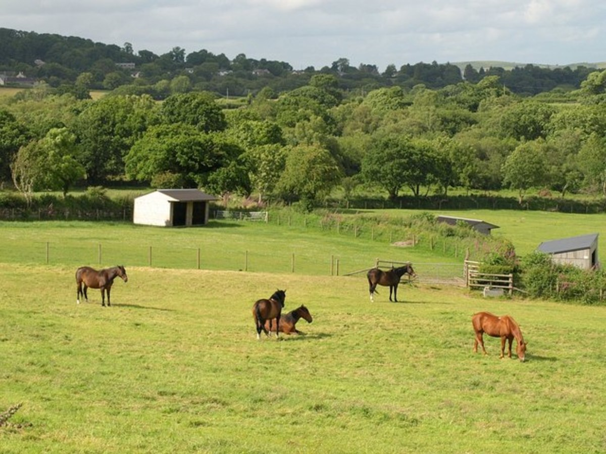 If you live in a more rural area, you can also offer stable cleaning or horse sitting!