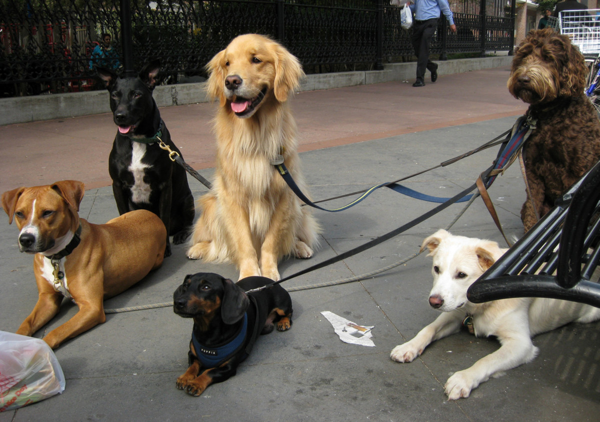 Taking pets on walks is one of the many services you can offer.
