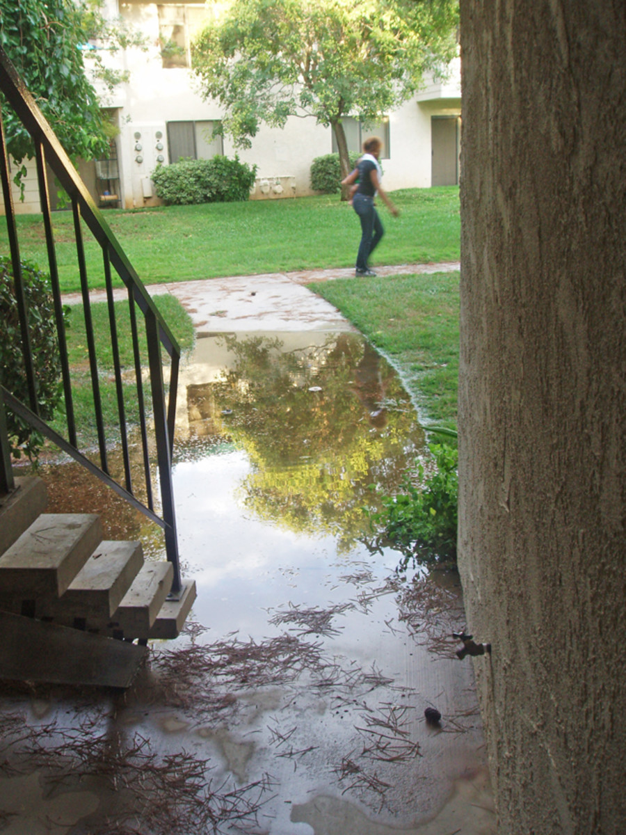 Lay porous surfaces: I would have requested the laying of porous sidewalks to prevent floods like this.