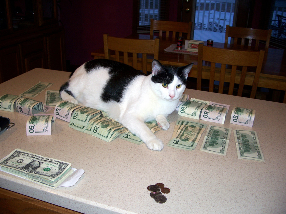 You're better off giving your money to this cat instead of wiring it to someone on Craigslist.