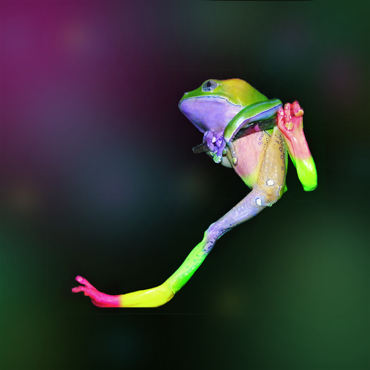 My poor frog Zoidberg with Photoshop body paint.