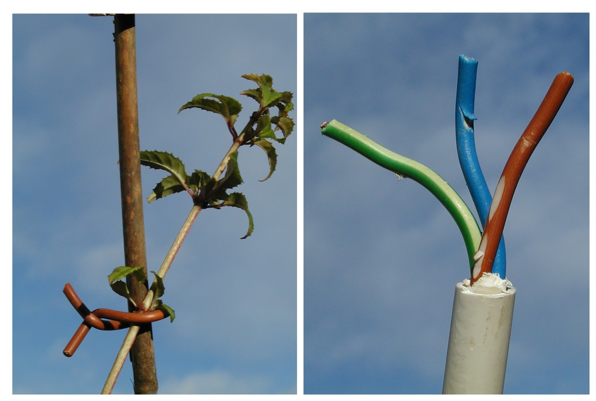 The inner cores of power cables can be used for tying plants to stakes