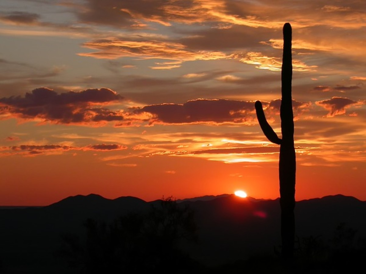 A beautiful desert sunset.