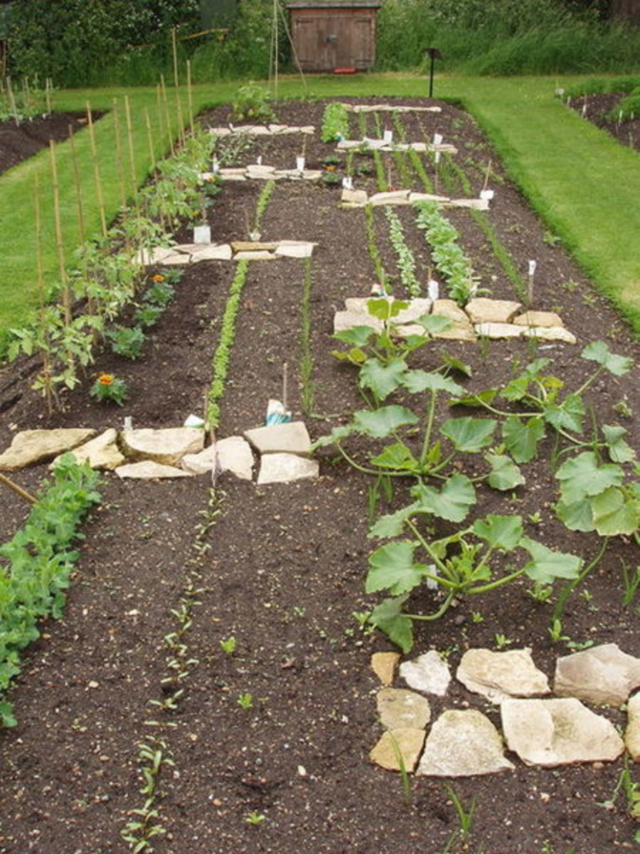 Grow vegetables in your garden and save even more money.
