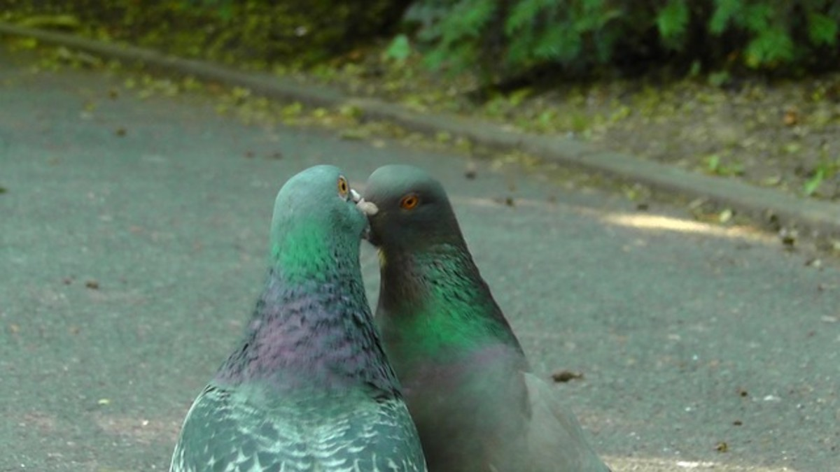 Two people gossiping can look like birds chirping at one another.