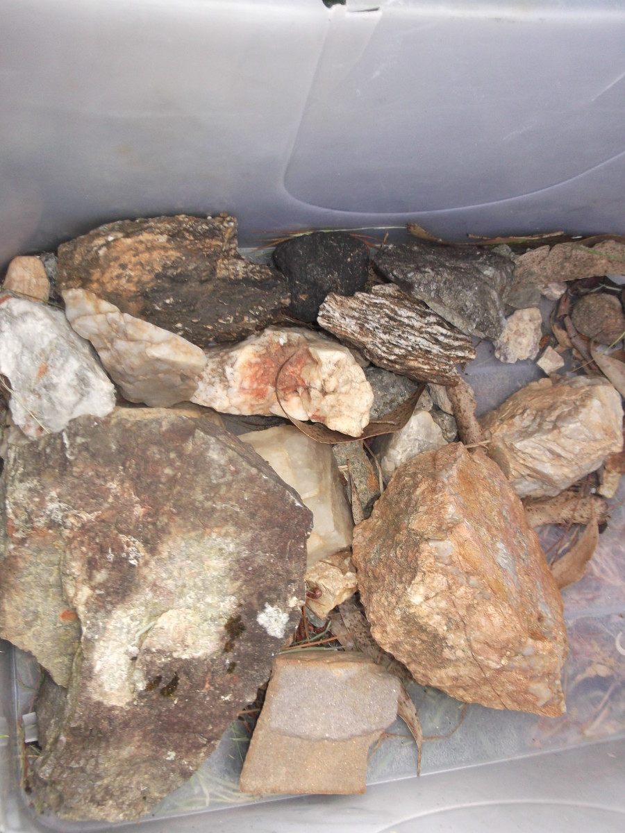 Learn about rocks with indications of possible gold. This pile is waiting for the next visit from our friendly geologist. I intend to label them with his feedback so I can better learn which type of rock to discard and which to collect.