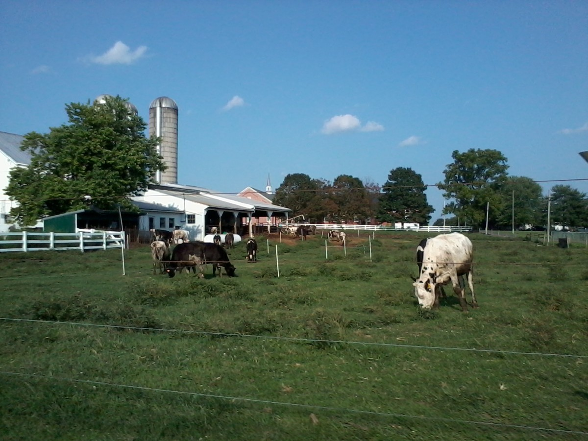 A small farm in Lancaster, PA