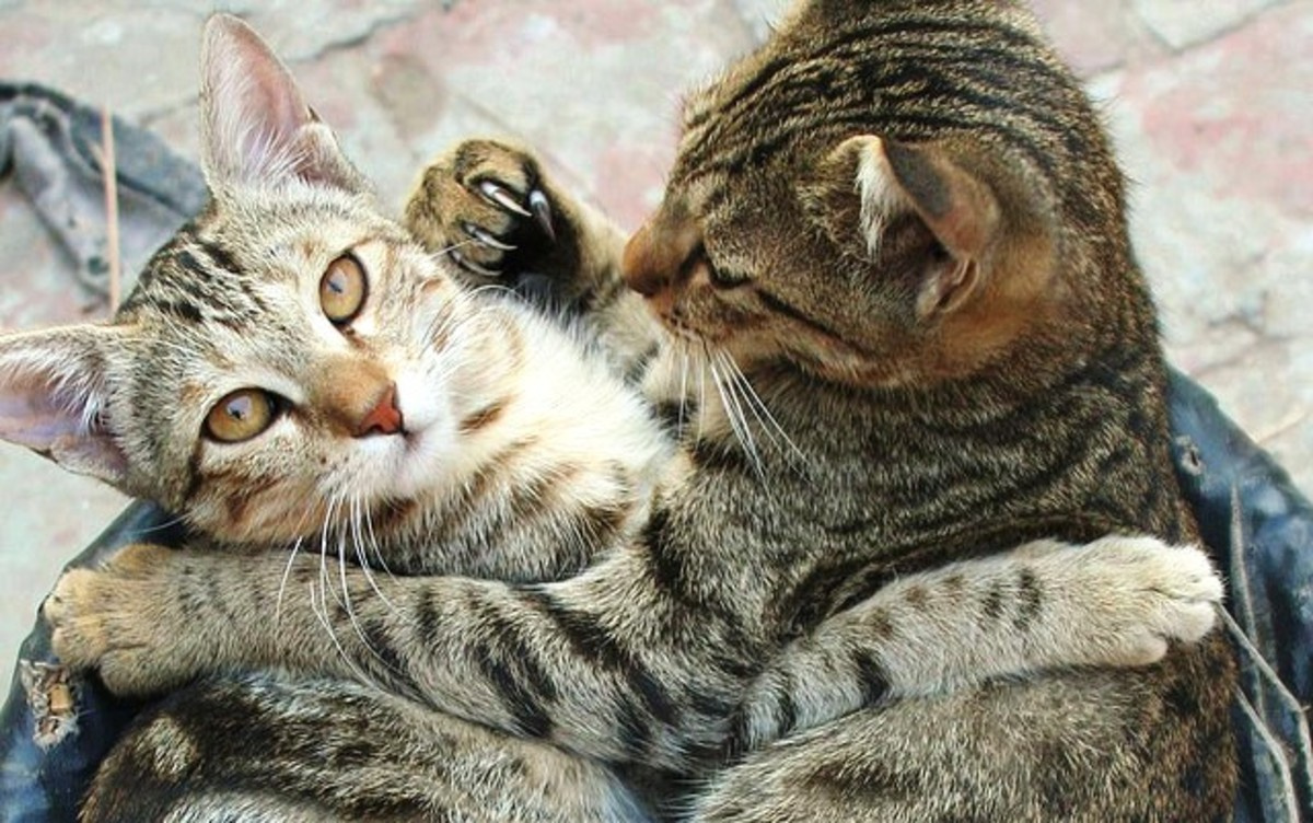 Work frenemies can be catty creatures!  Although they can be fun to work with, they can also damage both your confidence and your image of competence at work.