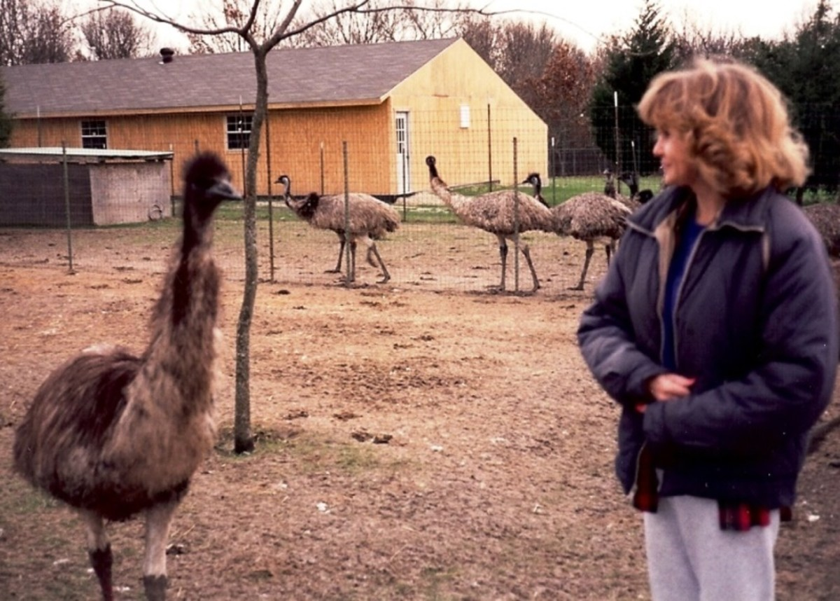 This is an emu ranch that housed multiple breeder pairs, a hatching barn and dozens of birds.