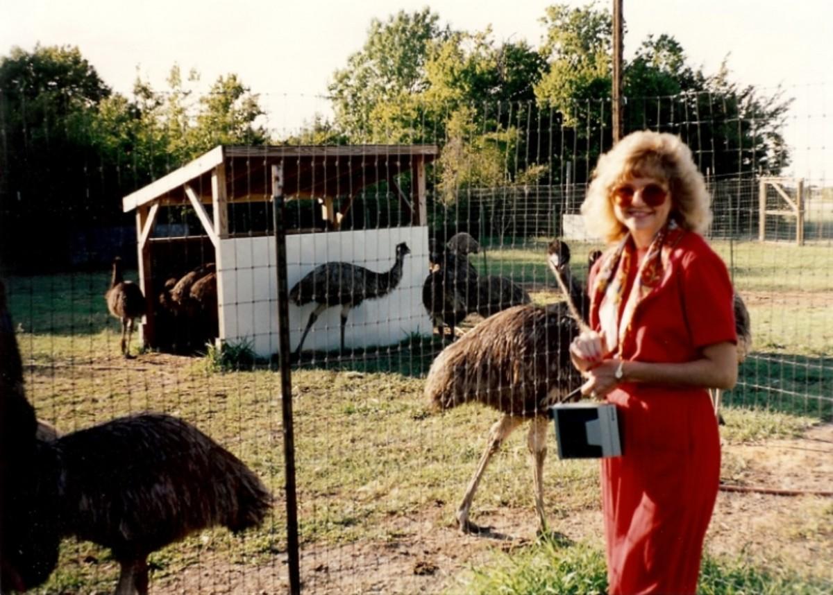 Visiting an emu ranch near our house.