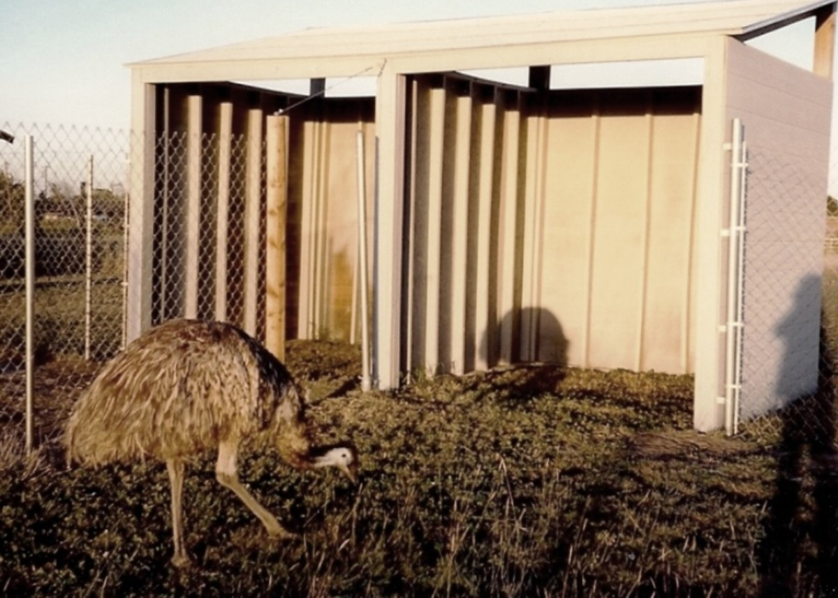Shelters provide shade and a safe place for the birds to eat their feed.