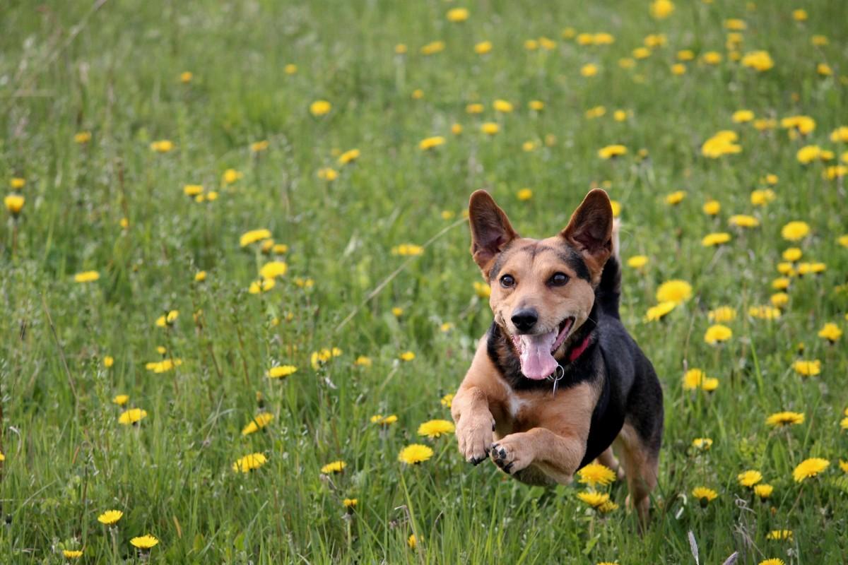 选择一个能让你的客户知道他们的宠物和你在一起会有多有趣的名字!