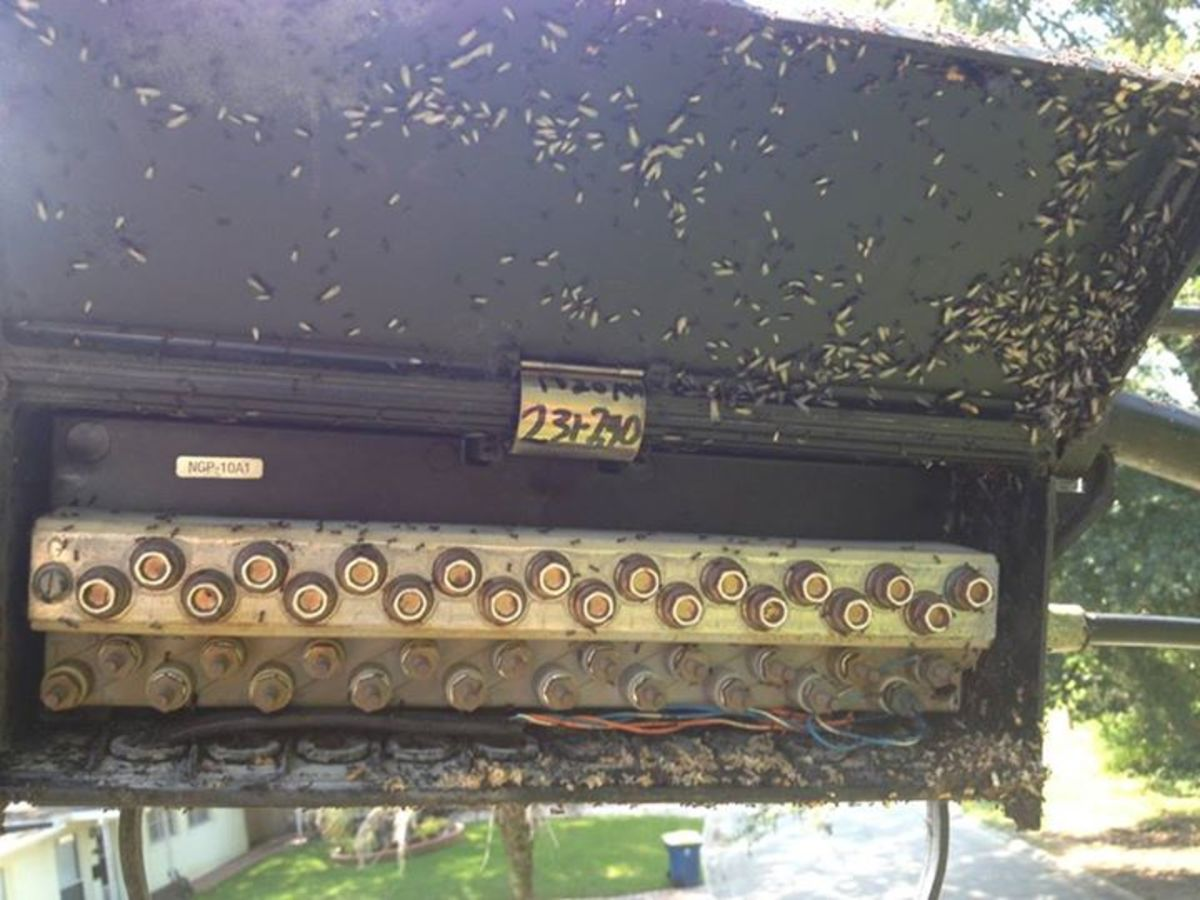 Aerial terminal filled with ants