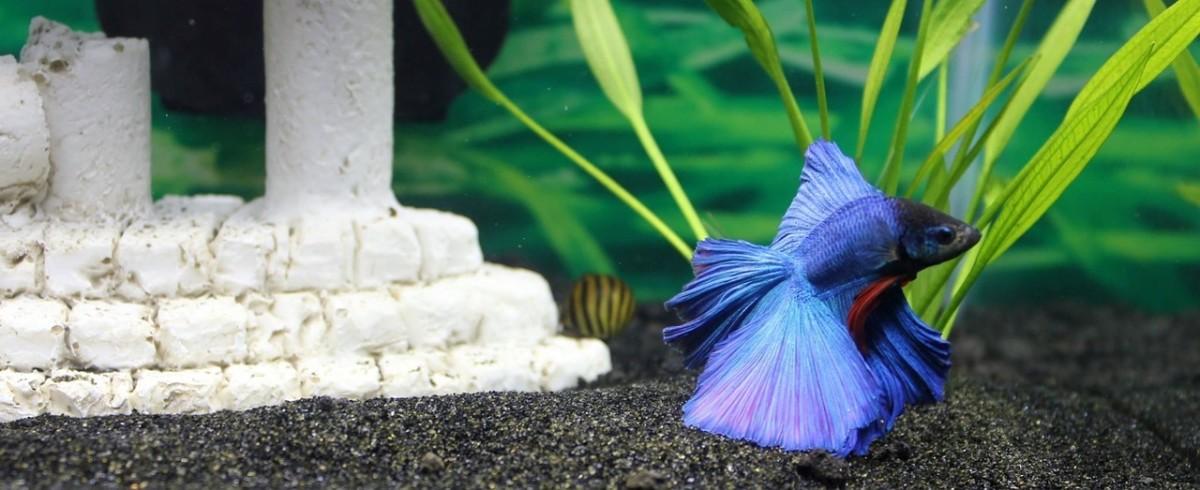 育种热带鱼类