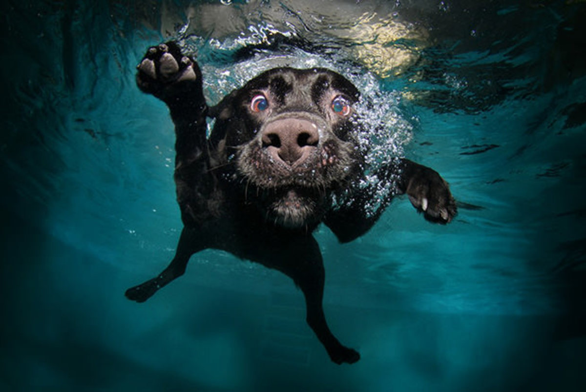 Shareable content can give your blog a lot of exposure, like these pictures of under water dogs did for photographer, Seth Casteel.