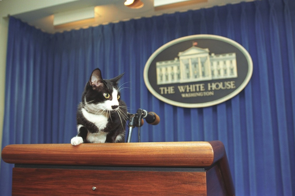 Socks the cat can lean on the lectern, because, well, he's a cat. But you aren't. So don't make this mistake the next time you give a speech.