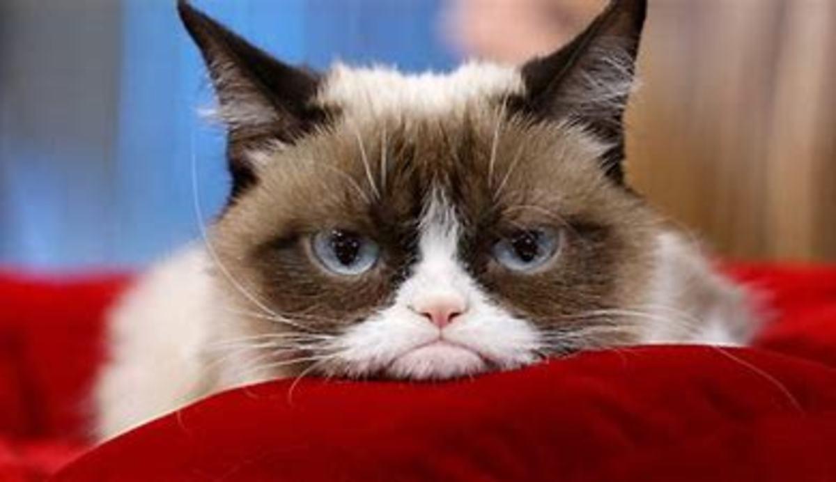 International Internet Sensation: Grumpy Cat