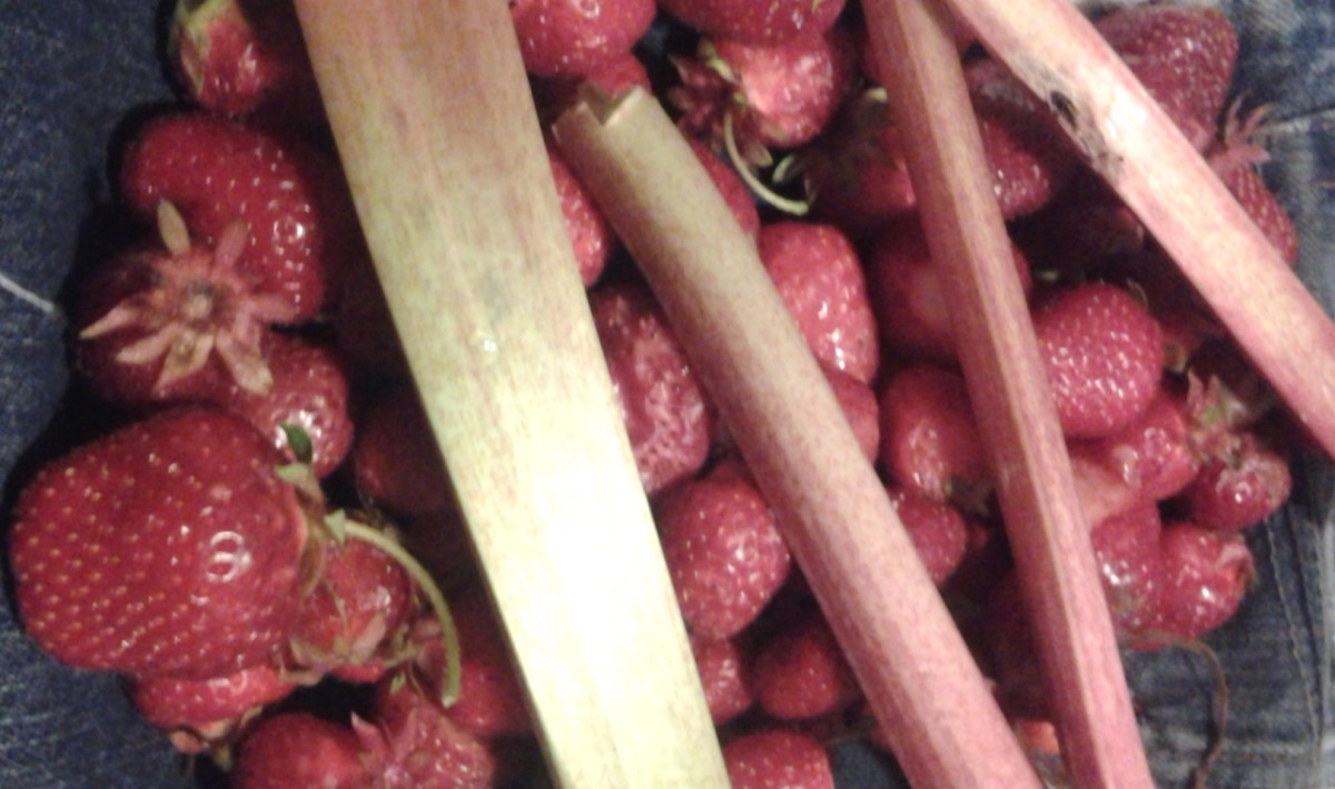Strawberries and rhubarb grown in my back yard