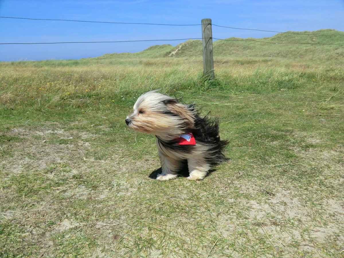 Watch out for strong winds if you have a small dog.
