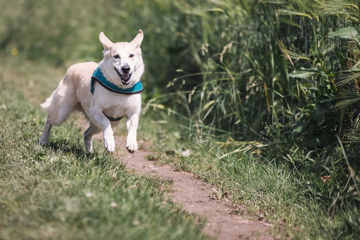 Dogs off leash can make walking your dog stressful in Colorado.