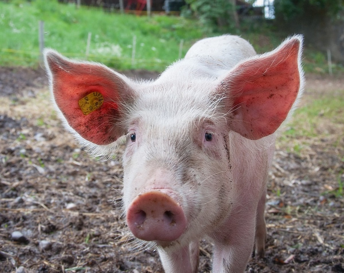 Earning a truly passive income is as likely as seeing a flying pig.