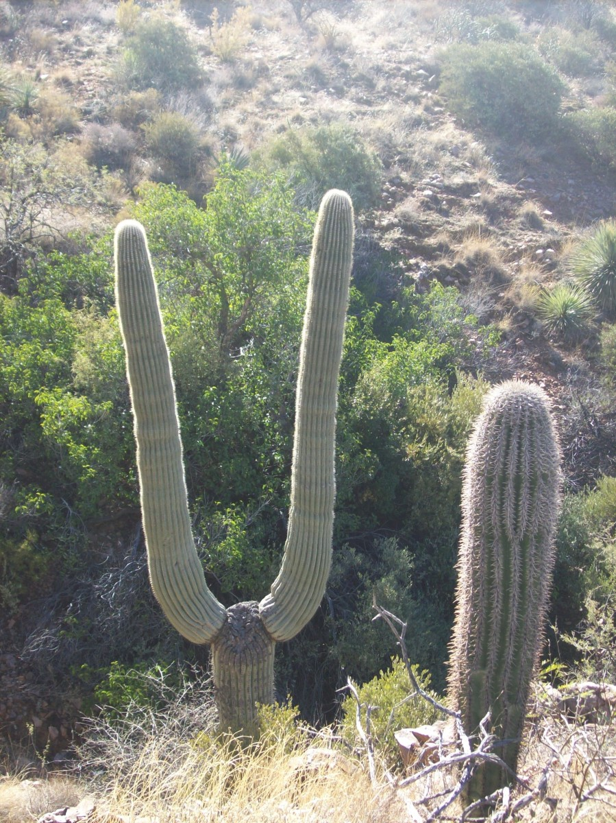Unusual shapes in the high desert are common.
