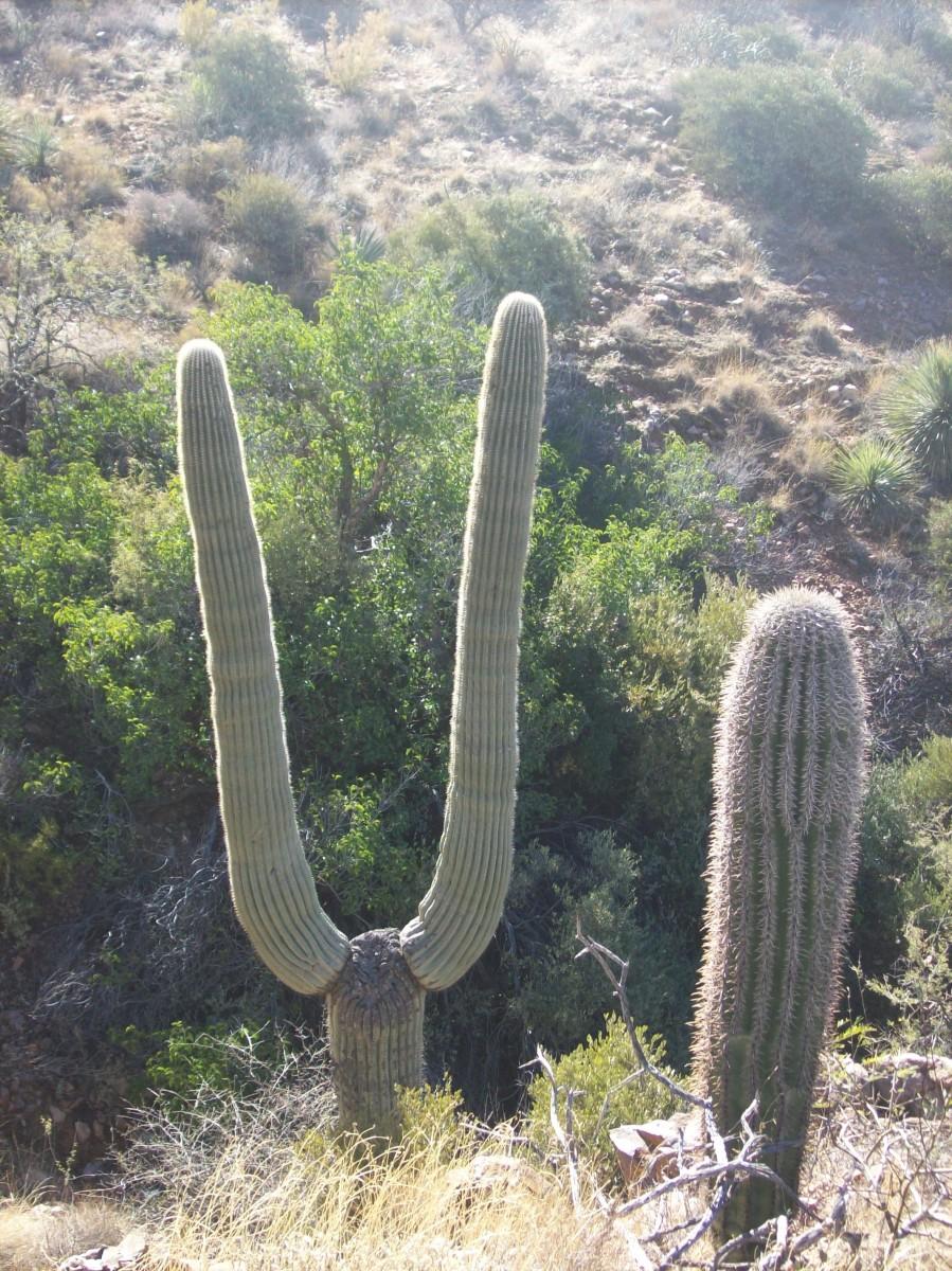 在高沙漠中,不寻常的形状是常见的。