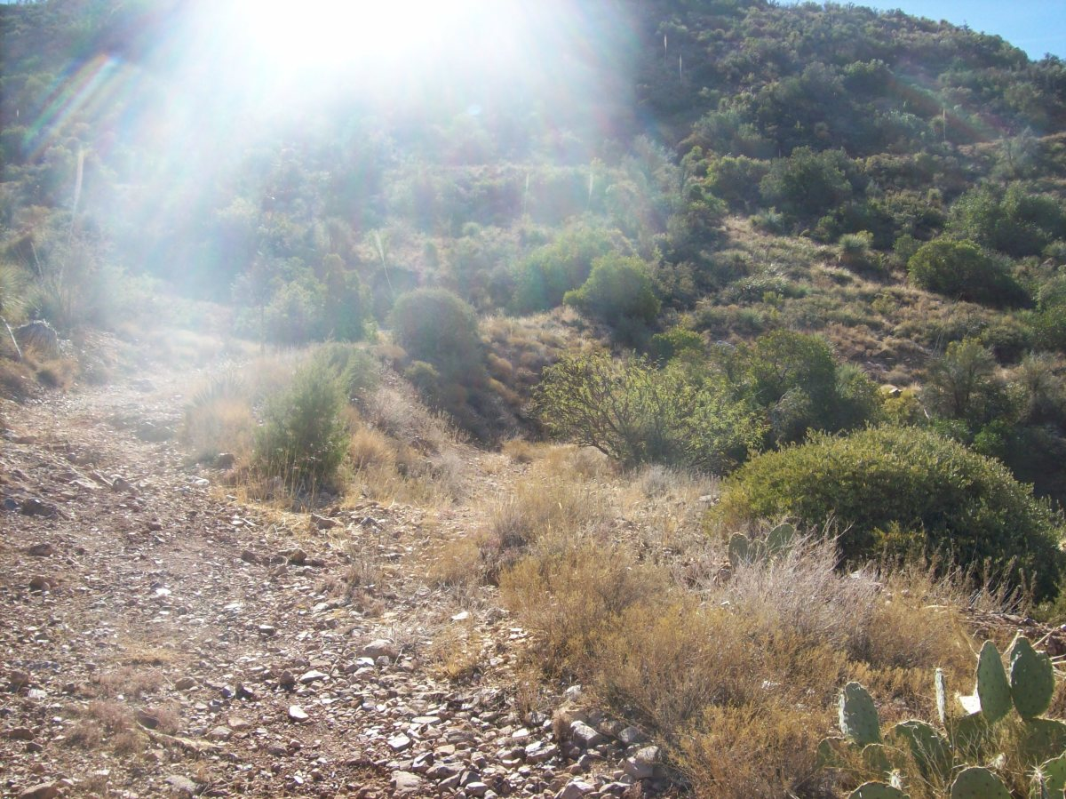 Fork in the trail - right trail leads to dirt build up on side of hill - left goes up a mountain