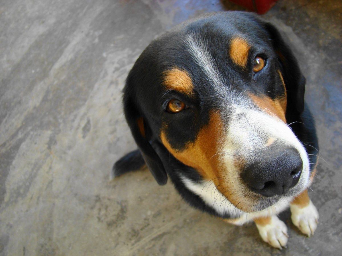 Your dog might give you the stink eye when you come home smelling like your client's pets.