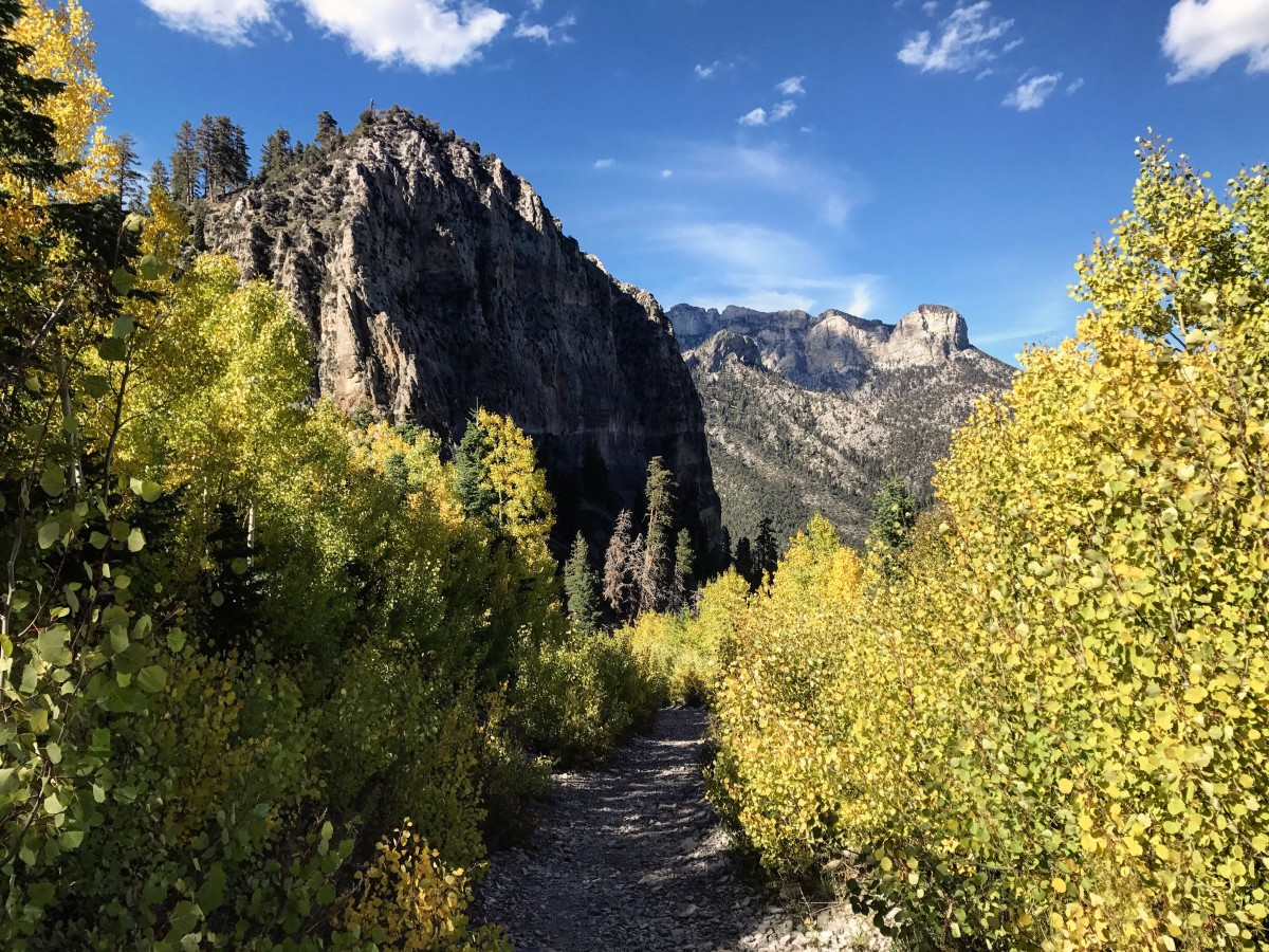 Cathedral Rock Trail on Mount Charleston in the fall.