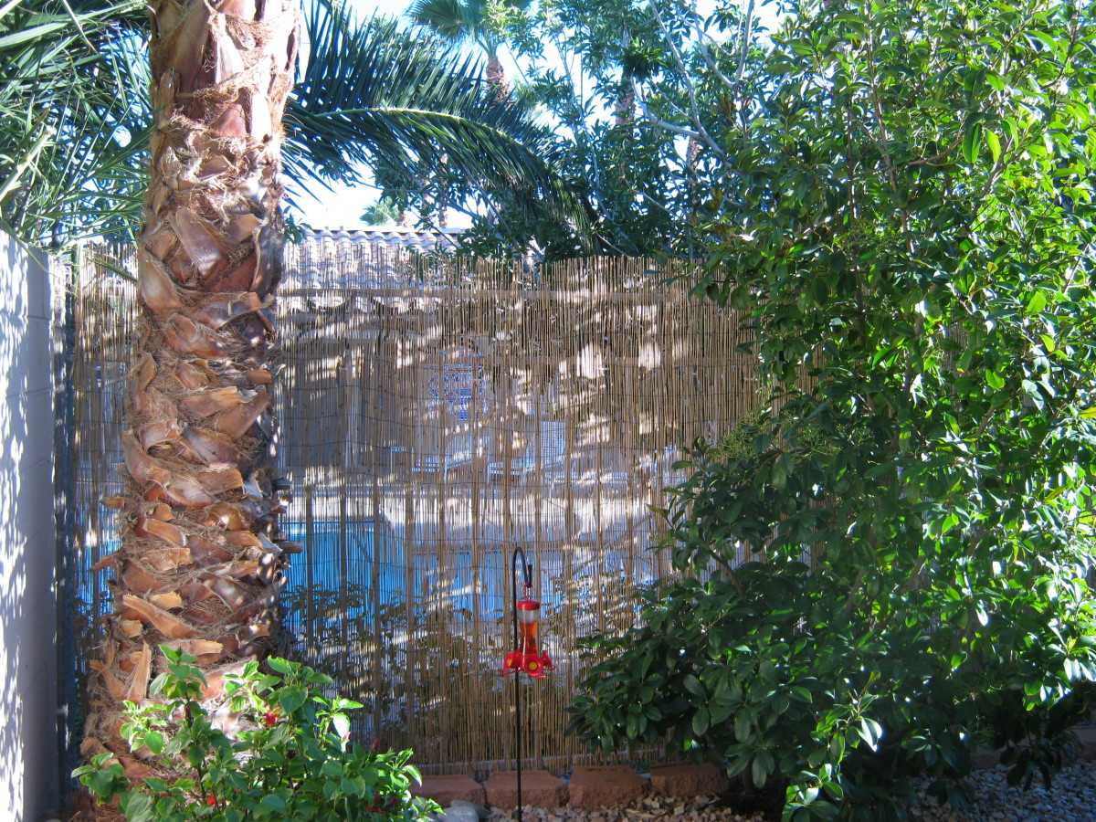 A view from the back patio of our Las Vegas town home. We had a view of the community swimming pool and two palm trees on our patio! That was what drew us to this home when we originally bought it.