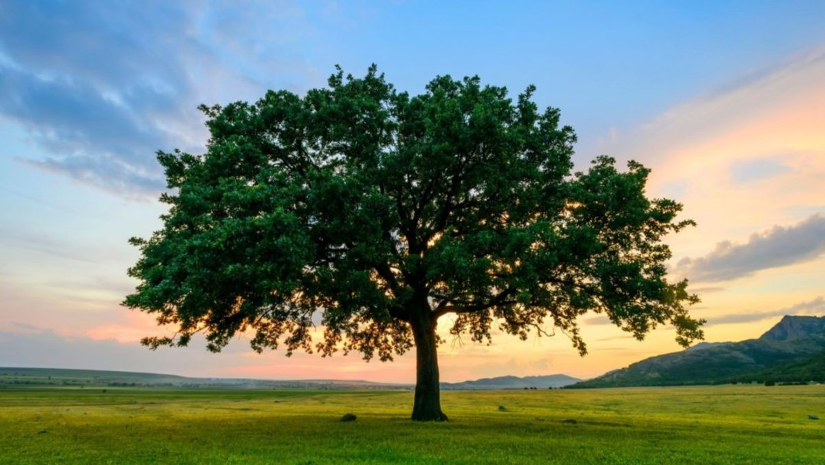 The best time to plant a tree was 20 years ago, the second best time is today.