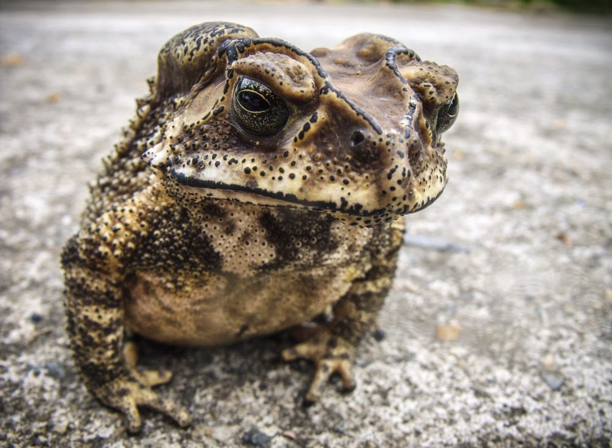 "My boss was a squat, bloated, emotionally unstable woman I referred to as ""the toad..."" ""The Toad"" had two female supervisors who would turn me into her for trivial offenses, such as leaving a stray scrap of paper cluttering the desk."