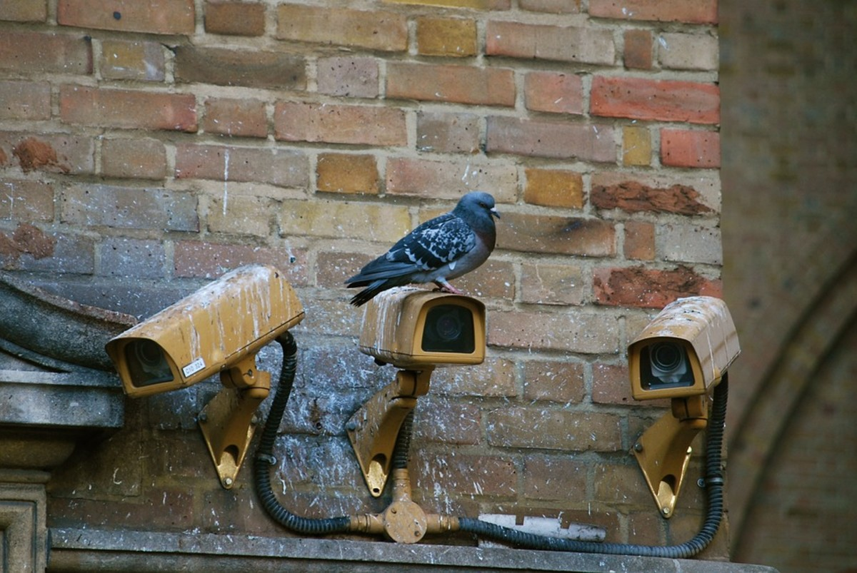 Many human letter carriers would echo this avian carrier´s response to cameras.