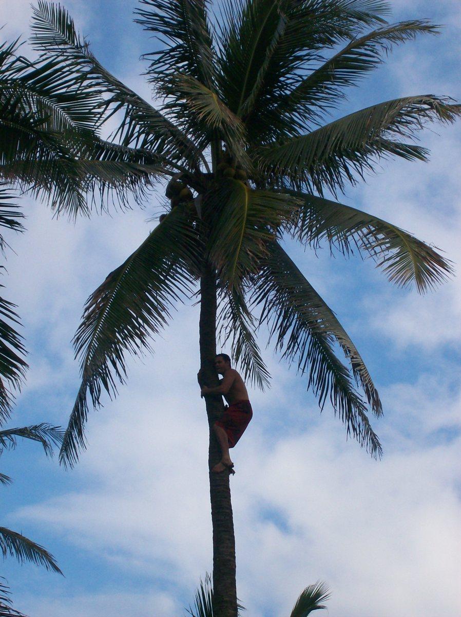 Coconut Gathering Demonstration, HI
