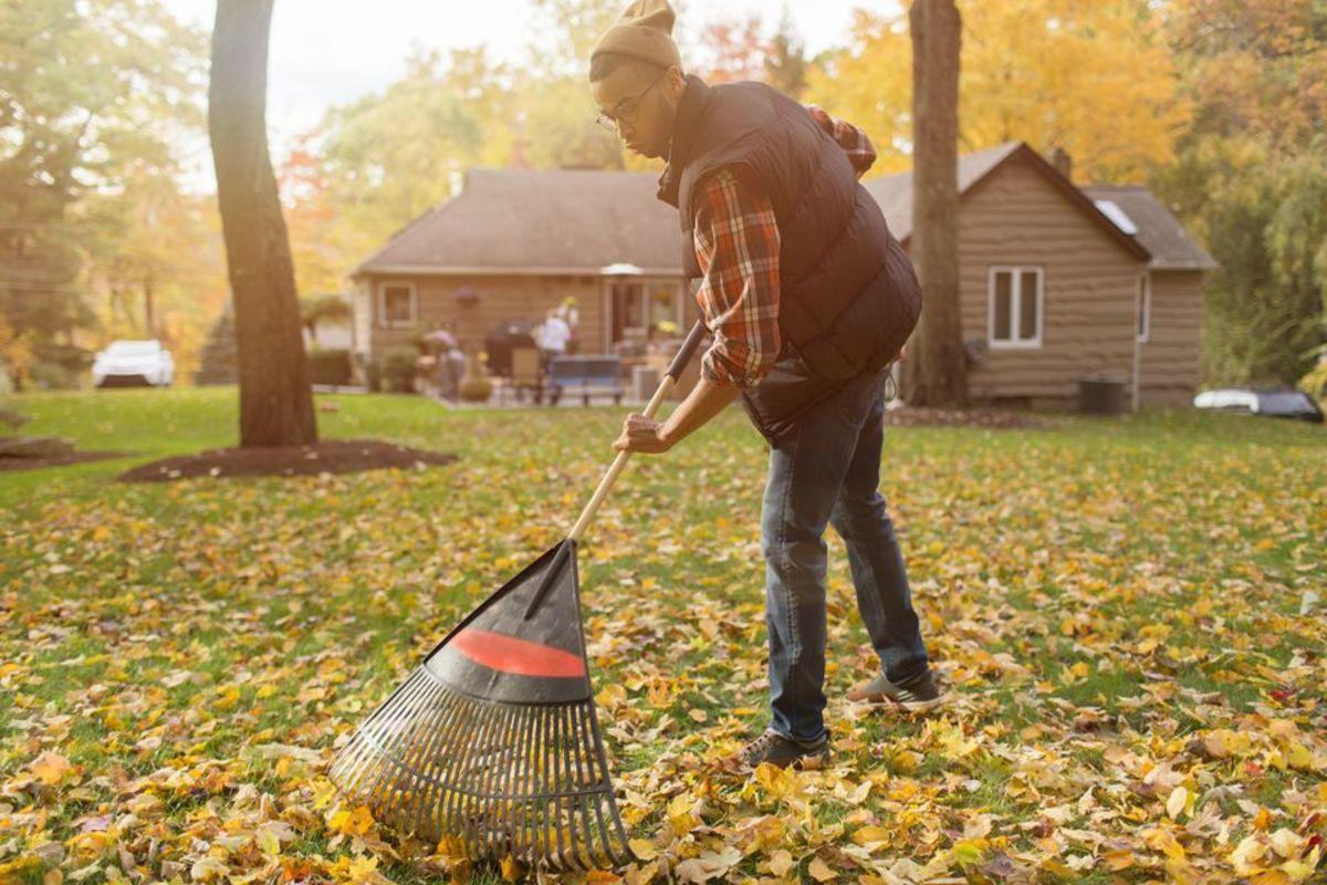 a guy raking leaves