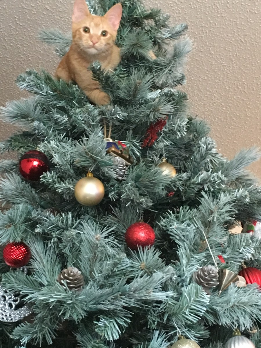 Cats may love climbing Christmas trees, but can be injured by ornaments, falling, or getting tangled in the lights.