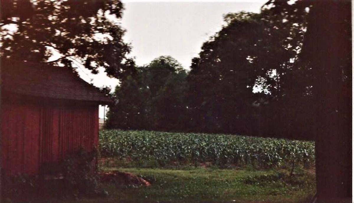 Holt's Produce Farm in 1984. The red corn crib building is still there and is about 100 years old.