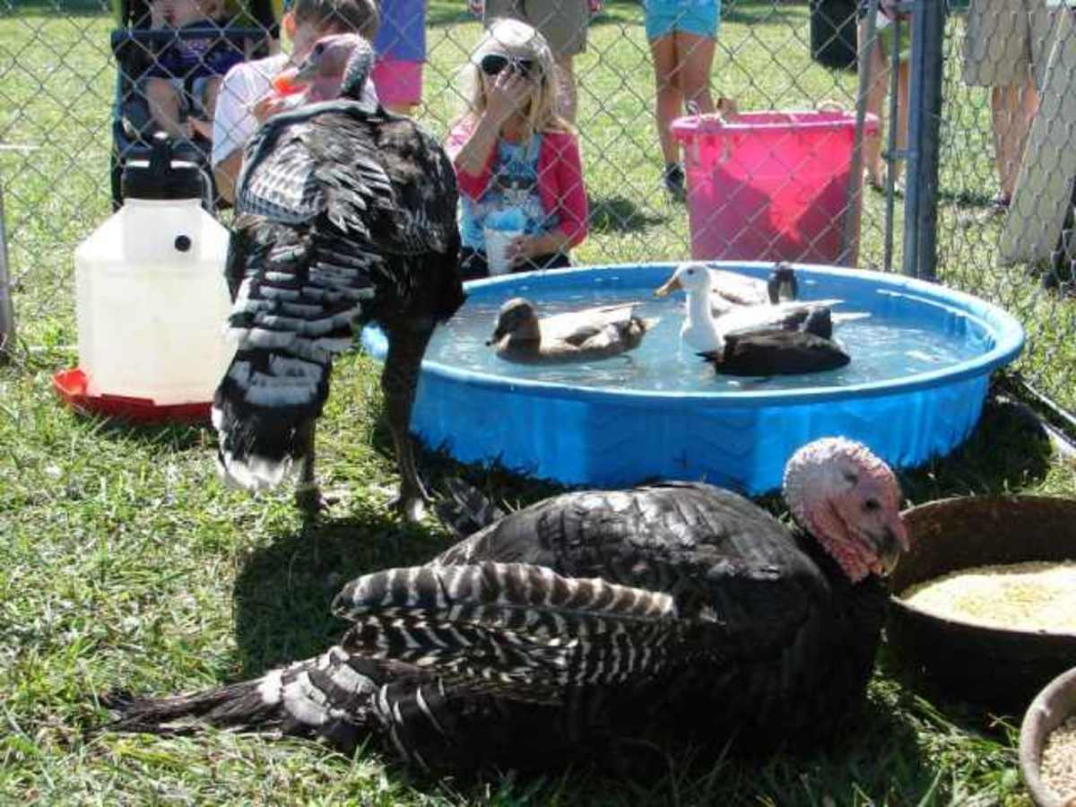 Our petting zoo travels to large community events and backyard parties throughout our area.
