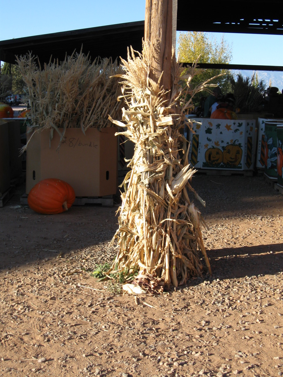 Typical Autumn decorations - pumpkin and dried corn stalks