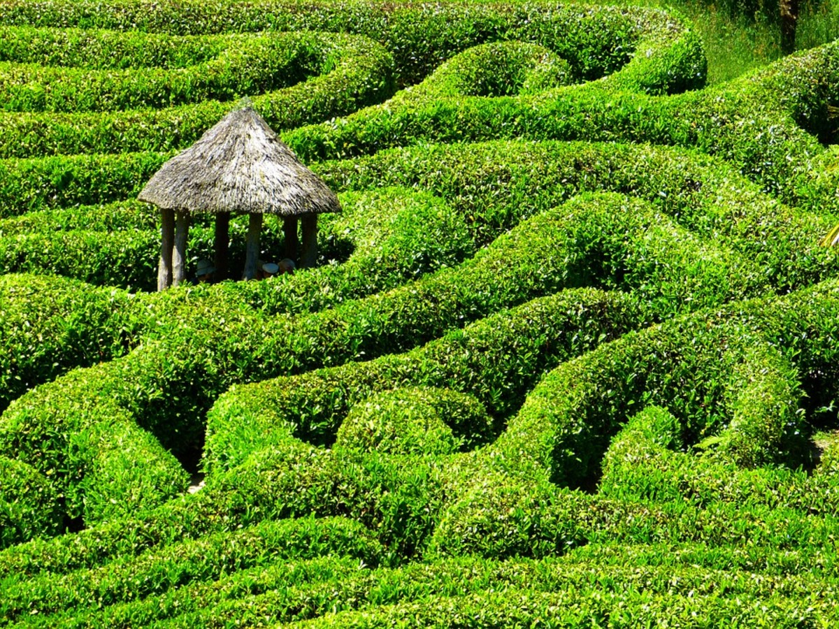 Sometimes navigating all these terms and trying to figure out your orientation is like making your way through a winding maze.