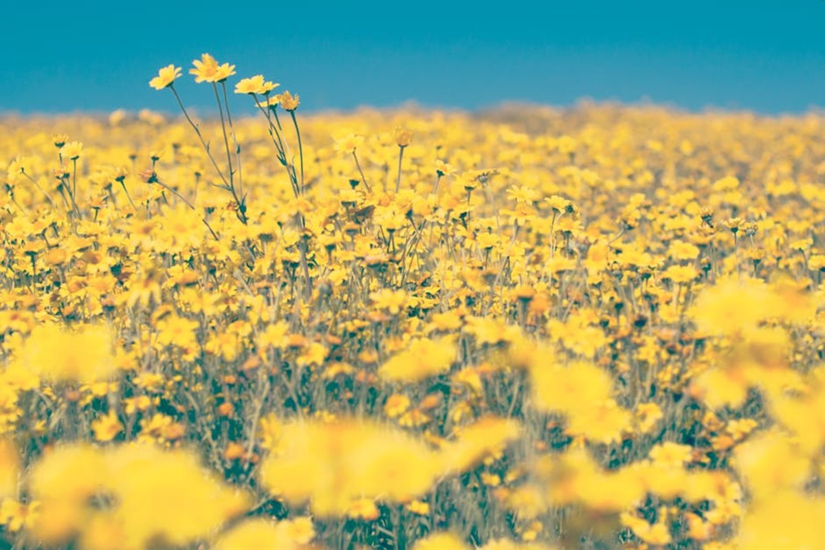 People who like yellow are like a field of wildflowers - vibrant and full of energy.