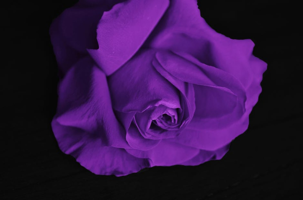 Purple is associated royalty and opulence.