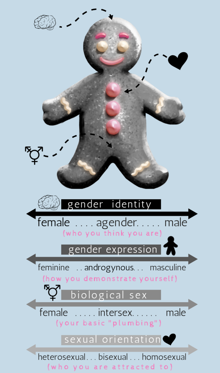 What is the difference between gender identity, gender expression, biological sex, and sexual orientation?