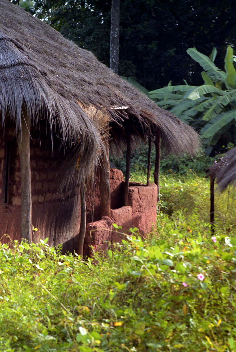 Orango women propose marriage by entering the grass-covered hut of the man they are proposing to and setting down before him a specially prepared meal of fish, cooked in red palm oil.  He cannot resist.
