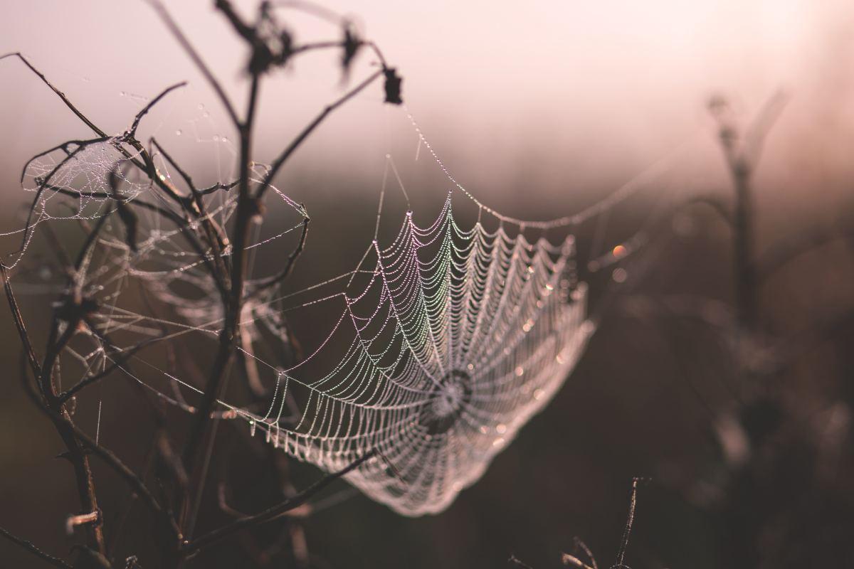 Spiderweb (noun): A silken web made by a spider.