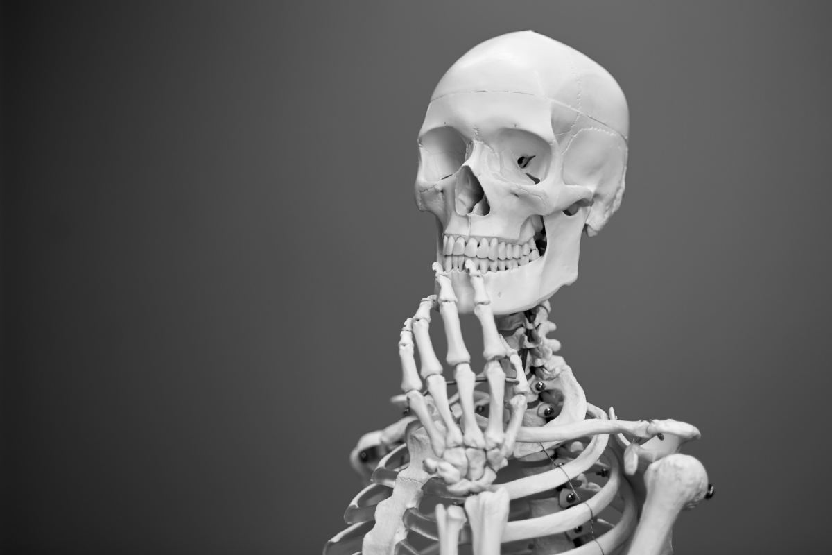 Skeleton (noun): An internal framework of bone and cartilage that supports the body of an animal.