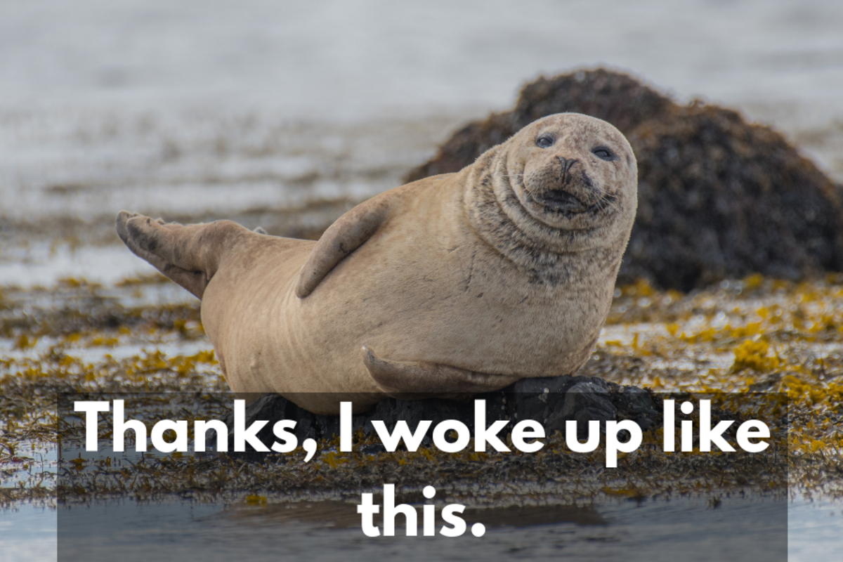 clever responses to compliments