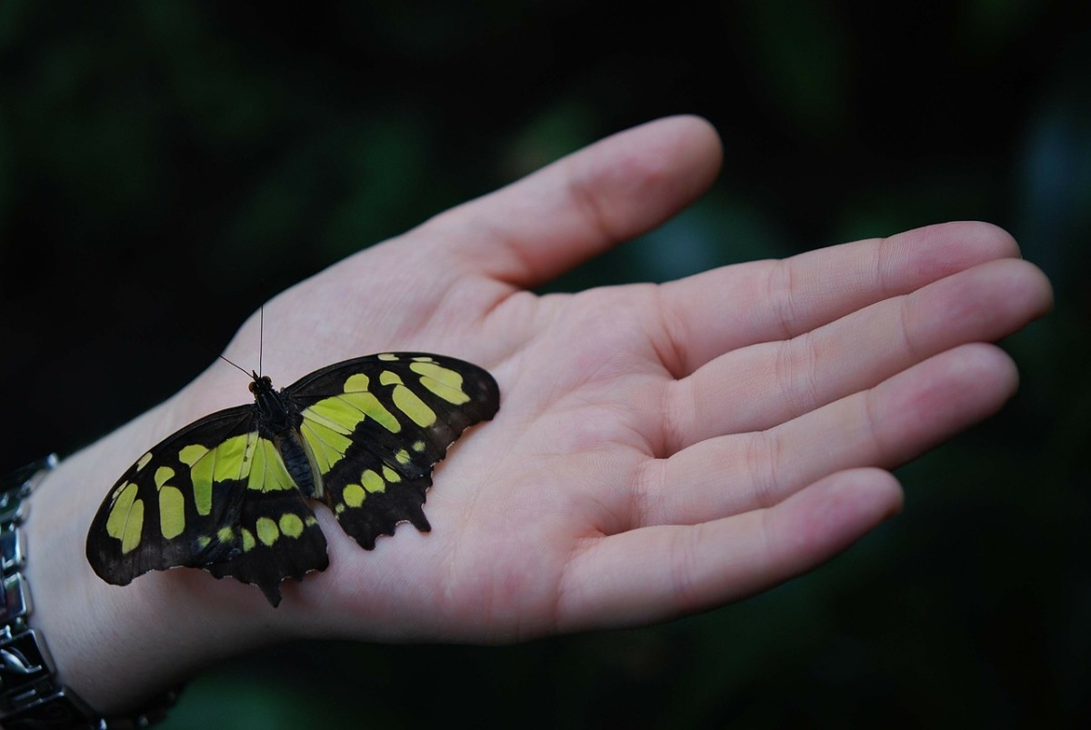 Just like a butterfly before it emerges from its cocoon, your friend is undergoing a very interesting transformation.